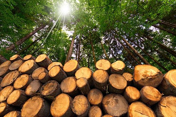 fa választás barbecuzáshoz okosgrill
